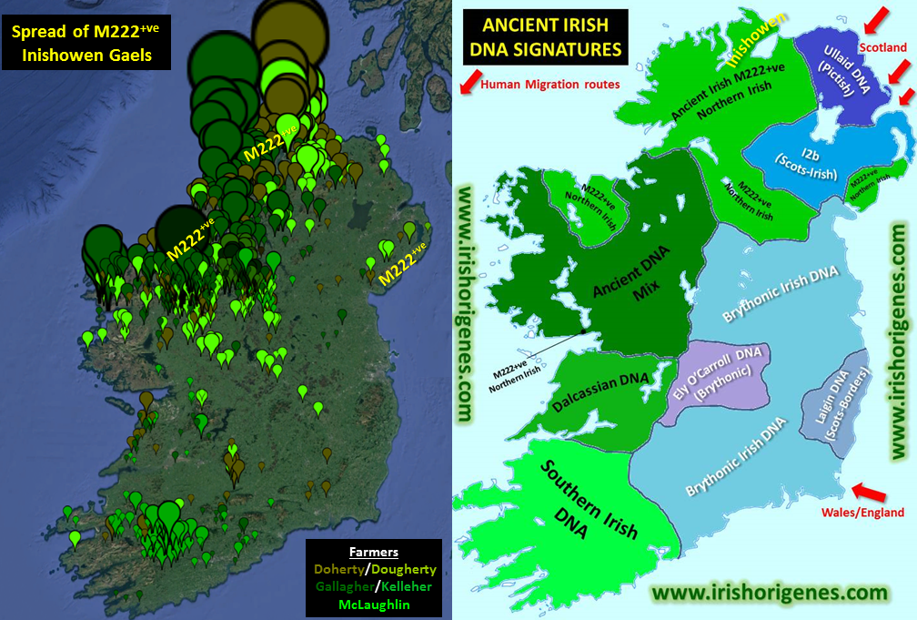 The Spread of M222 | Irish Origenes: Use Family Tree DNA to Discover